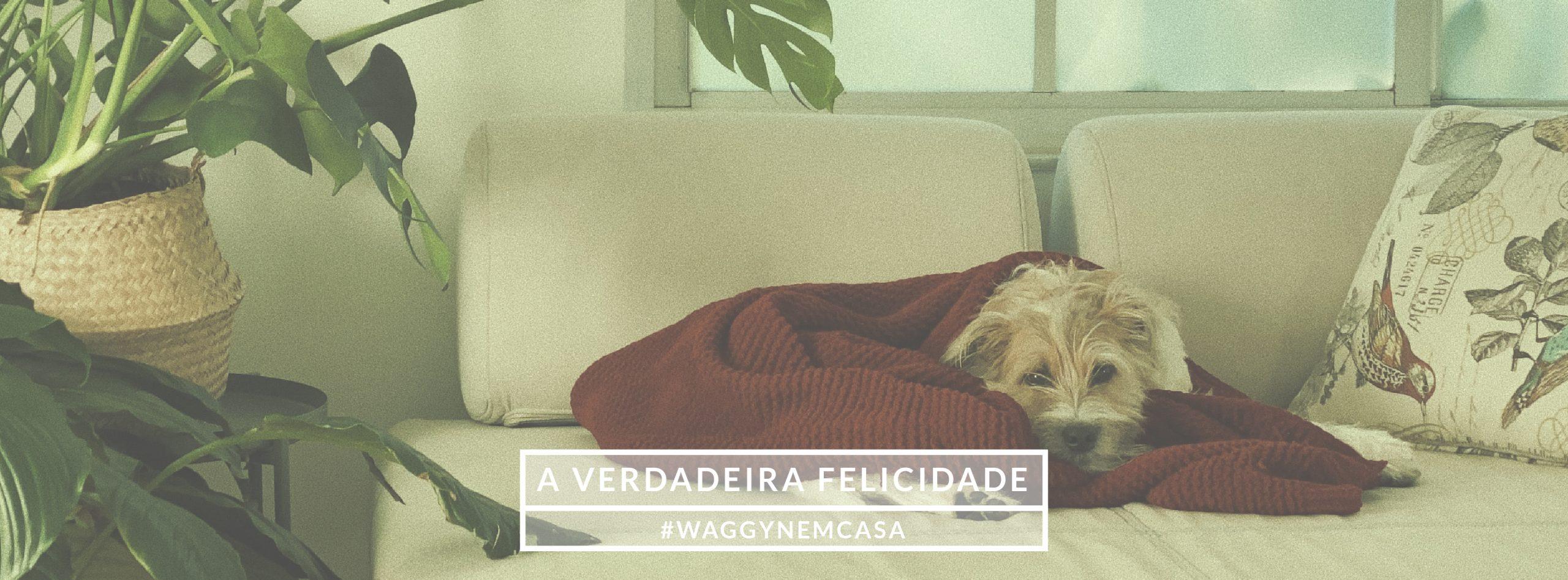 Video de um Cão - Bem Vindo - À loja do teu melhor Amigo - Waggyn - Online Pet Shop